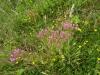 flowers-July
