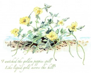 Yellow Horned Poppies