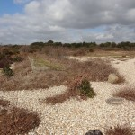 Browndown ranges