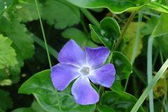 flowers-June