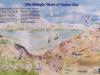 Life on the Shingle Shore