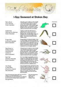 Seaweed I-Spy