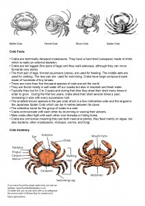 Crabs I-Spy Sheet