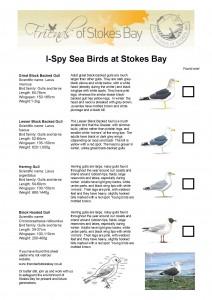 Sea Birds Identification Sheet